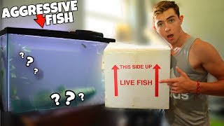 my-new-pet-water-cow-rescue-fish