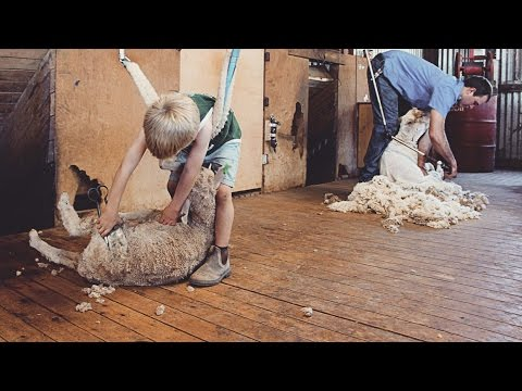 Charlie the Shearing Kid - Behind the News
