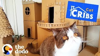 The World's Most Epic Cat Cribs | The Dodo