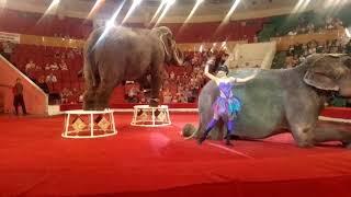Шоу слонов 293