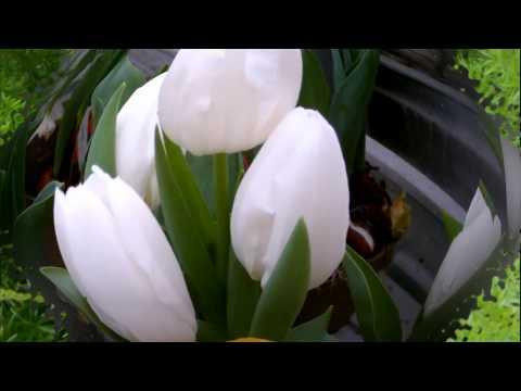 Видео открытки с цветами