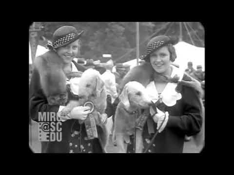 Vintage Bedlington Terriers