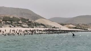 Musandam Discovery Diving