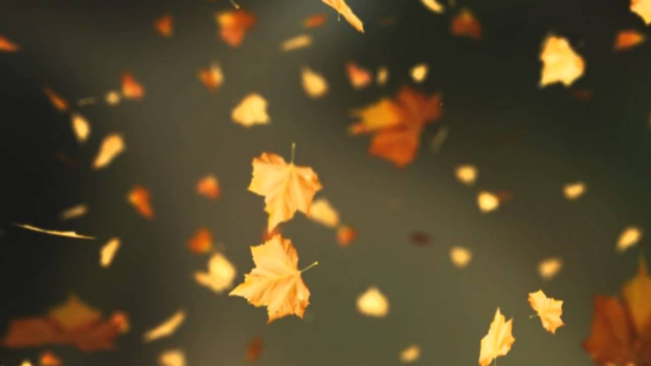 Fall Of The Leafe Wallpaper Falling Autumn Leaves Background Loop 2 Read Desc Youtube