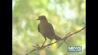 Ahmedabad:world sparrow day celebration