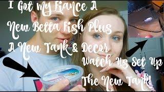 I BOUGHT MY FIANCE A NEW KOI BETTA FISH FROM PETCO! | WATCH US SET UP THE TANK! | ItsAnnaLouise