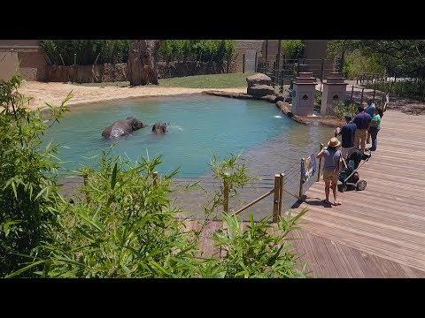 New Elephant Habitat Expansion Now Open!