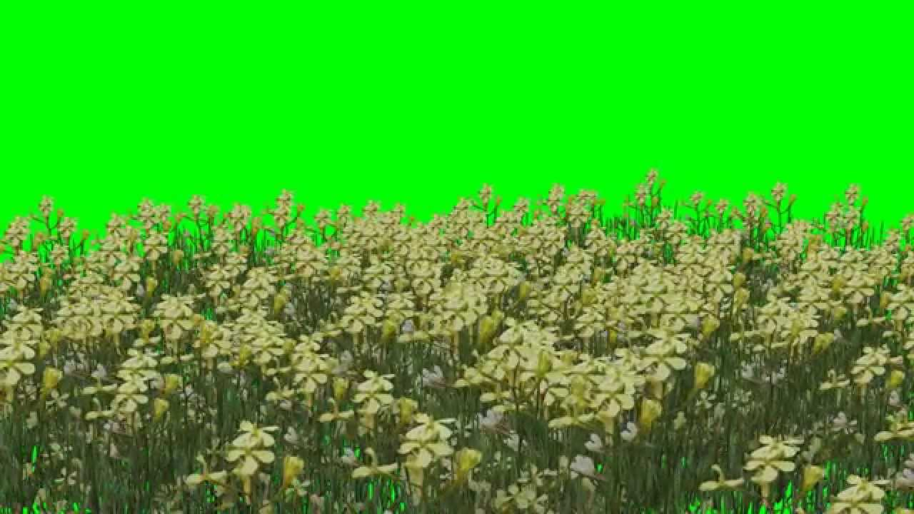 Download Flowers Hd Yellow Flower Green Screen Video Youtube