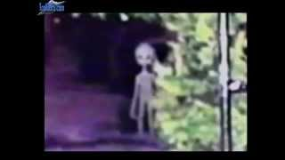 Real aliens / greys caught on film!!!!