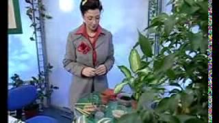 Биология 8. Высшее растение папоротник — Академия занимательных наук