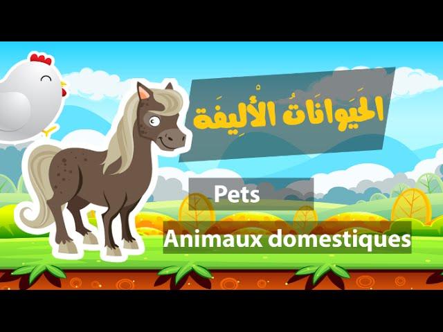 Learn arabic (pets) – Apprendre l'arabe (animaux domestiques) – الحيوانات الأليفة باللغة العربية