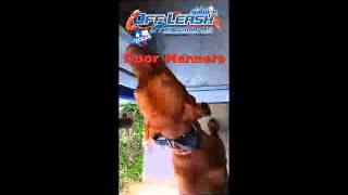 Door Manners | Off Leash K9 Training Texas