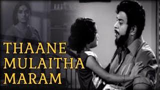 Thaane Mulaitha Maram   Itho Enthan Deivam Video Songs   இதோ எந்தன் தெய்வம்   Old Tamil Song