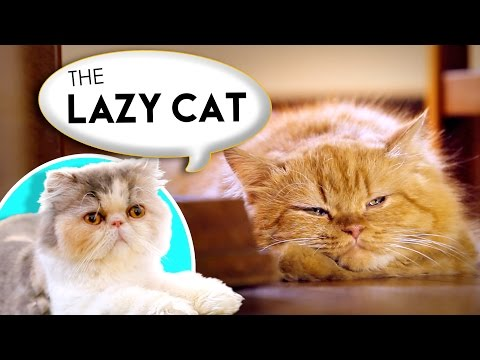 How to Name Your Lazy Cat