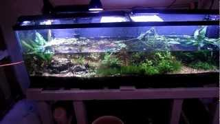 How To: Aquarium Water Change Why You Need To Do It What It Does