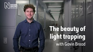 The beauty of light trapping | Natural History Museum