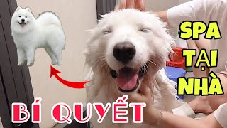 Bí Quyết Tắm Chó TRẮNG SẠCH THƠM Tại Nhà Như Đi Spa