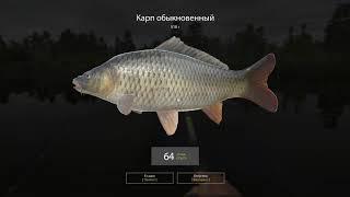 Русская рыбалка 4 - озеро Медвежье - Карп в Затопленном овраге