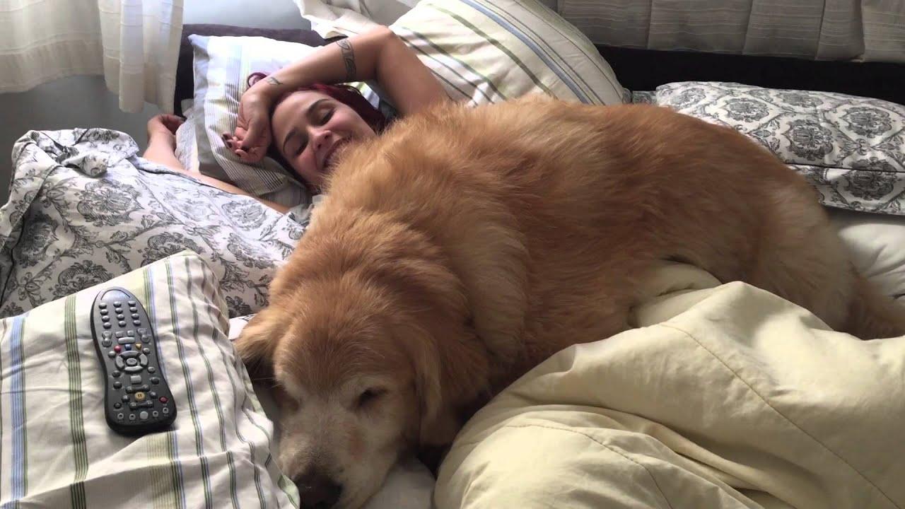 Dog Human Like Bed