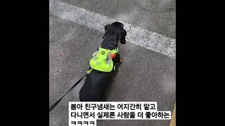 강아지 친구보다 사람을 더 좋아하는 강아지  #봄이 #…