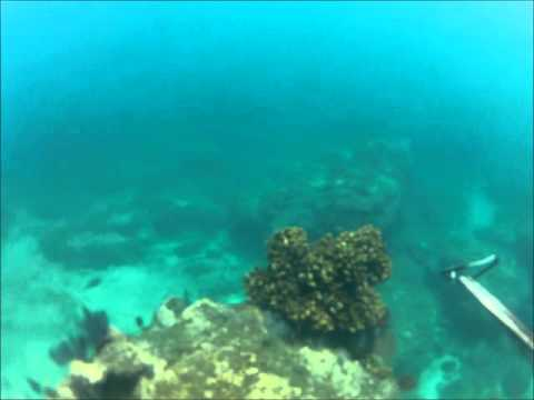 Spearfishing Punta Arena 2012