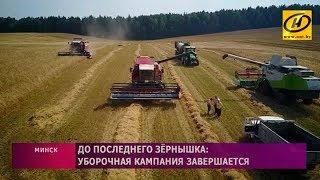 Массовая уборка зерновых в Беларуси завершается