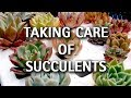Taking Care of Succulents - Mail Order