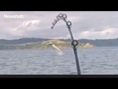 Rough Ride: New Zealand Kayak Fisherman Hooks Huge Shark | Newshub