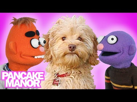 Little Puppy Song for Kids + More Songs About Dogs | Pancake Manor