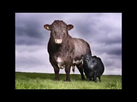Pets Giants. The huge animal in the world