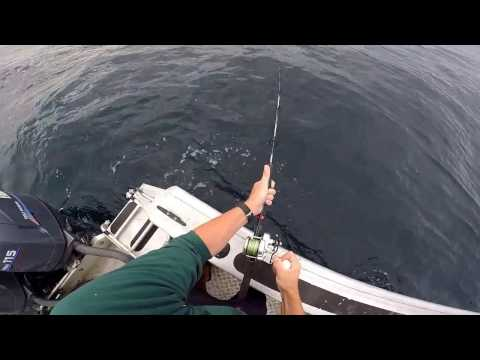 Westhaven Fishing Adventure - Golden Bay