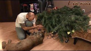 Пума Месси Ёлки 2 Cougar Messi Christmas Tree 2