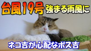 Boss cat went to check on Calico cat after the typhoon No.19