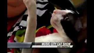 Nashville Cat Show