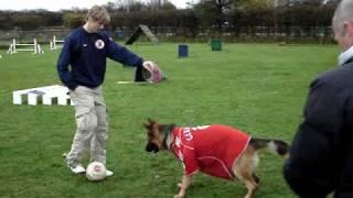 Fernando Torres Vs Hank : 1 On 1. (filmed At West Lancs Canine Centre, Formby)