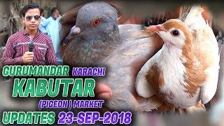 Guru Mandir Kabootar Market 23-9-2018 Latest Updates (Jamshed Asmi Informative Channel)  Urdu/Hindi