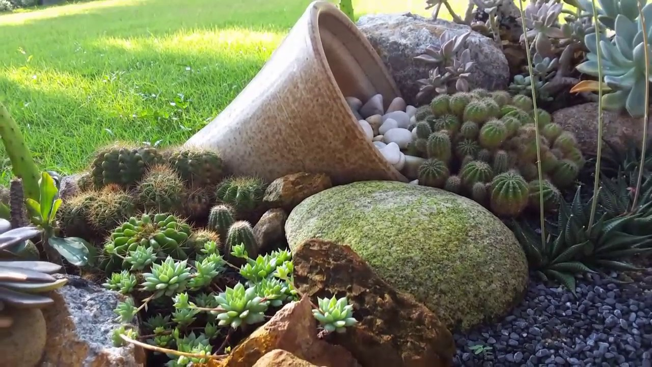 Recovery Of Succulent Rock Garden From Scorched