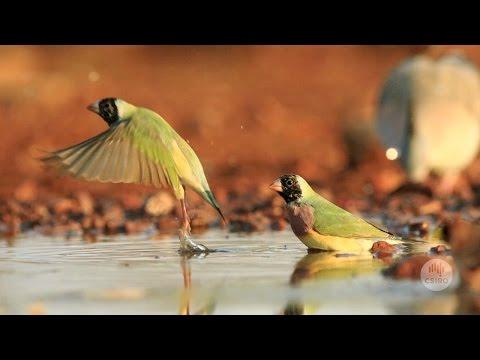 Australia's Biodiversity: Management And Restoration Tools
