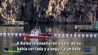 Esta es la historia de Keiko, la orca de Free Willy. KEIKO 検索動画 23