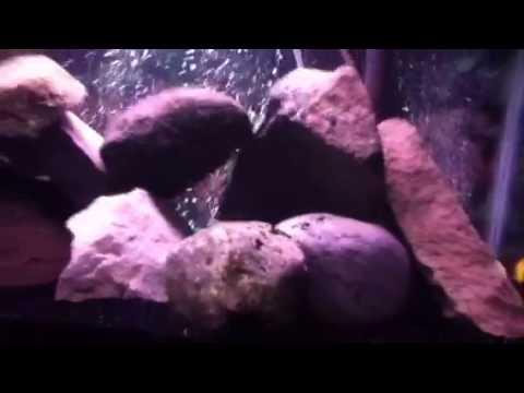 How to Aquascape a Cichlid Tank - YouTube