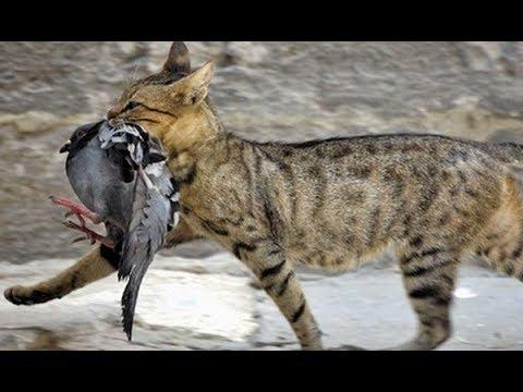 Вопрос: Как поймать кошку?