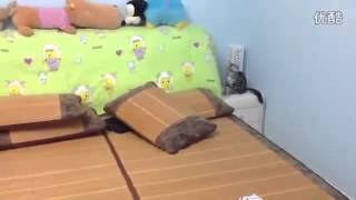 Улетное видео самые смешные животные