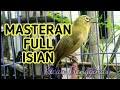 Masteran Pleci Full Isian Pancingan Pleci Gacor  Mp3 - Mp4 Download