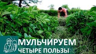 видео Как правильно выполнять мульчирование почвы