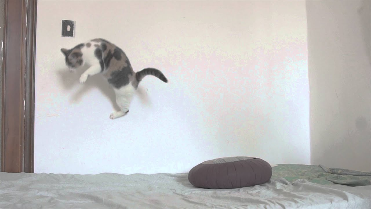 Super Cat Test Slow Motion Sony Alpha 7s 50 Fps Youtube