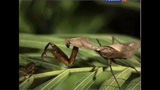 Такие важные насекомые