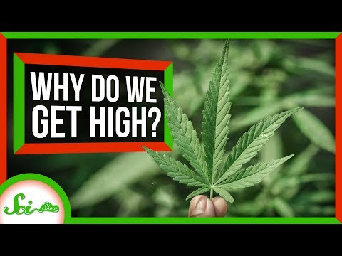 Why Do Humans Like To Get High?