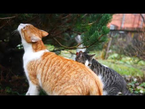 Talking cats and a Christmas tree 4k UHD 🐈 🐱