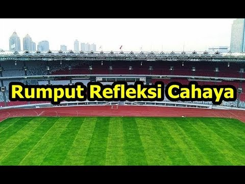 Rumput Stadion GBK Mulai Dipola Refleksi Cahaya, Hasilnya Luar Biasa   Update Stadion Terbaru