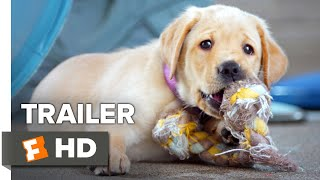 Pick of the Litter Trailer #1 (2018) | Movieclips Indie